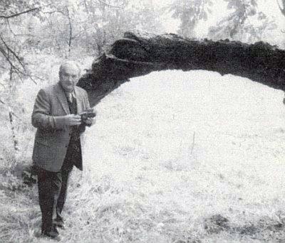 ... a stará třešeň při místech, kde stával...