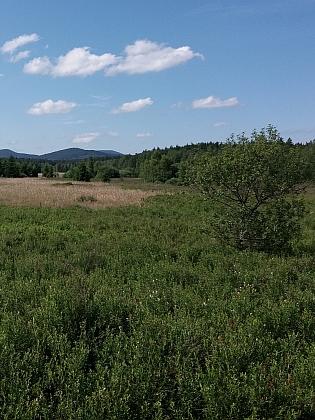 Mokřady u rybníku Olšina