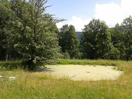 Téměř už zarostlý rybník