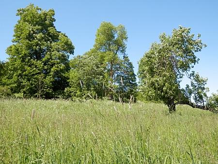Hubenov u Mokré - někdejší statky připomínají už jen zplanělé ovocné stromy