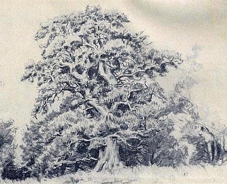 Jeho kresba s titulem Starý dub