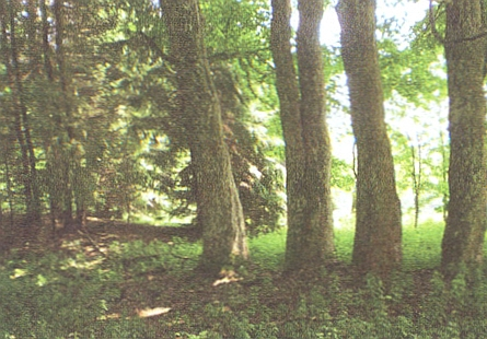 Jen skupina stromů dokládá, že se na tomto snímku díváme směrem k někdejšímu Marxtn Hofu