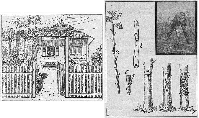 Dvě kresby z časopisu Der Gartenfreund s jeho autorskými signaturami