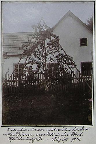 """""""Kulturně-historické muzeum"""" v Horní Stropnici, které tu založil roku 1906, tu záběrem ze svých sbírek sousedí na stránce školní kroniky se snímkem """"trpasličí hrušně s mnoha sty ušlechtilých plodů"""" v ovocném sadě školy"""