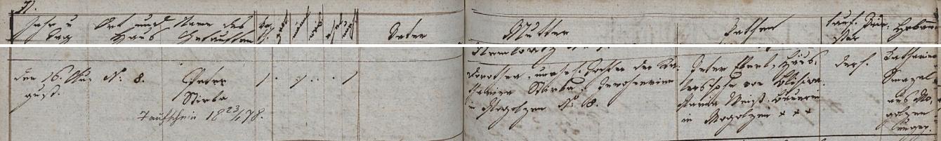 Záznam křestní matriky farní obce Bukovec (Mogolzen) o narození jeho otce, nemanželského syna Dorothey Stirbové ze zdejšího stavení čp. 8