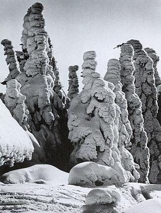 """Vrchol Plechého je nejvyšší na """"české straně"""" Šumavy a je středem a počátkem Tannichova líčení šumavské flóry; v zimě zde dosahuje sněhová pokrývka až 250 cm a průměrná roční teplota je tady pouze 3 °C"""
