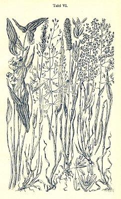 Obálka (1928) a ilustrace Felixe Schustera zachycující při arabské číslici 6 šídlatku z Plešného jezera