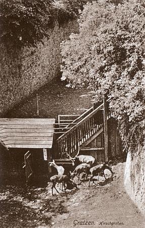 Jeleni v hradním příkopu novohradském napohlednici z dvacátých let 20. století