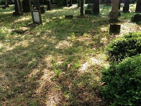 Místo, kde se podle seznamu pohřbených nachází na českobudějovickém židovském hřbitově jeho hrob