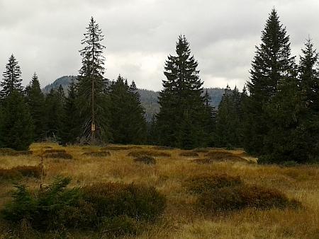 Výhled na Velký a Malý Roklan z Medvědí hory dnes kryjí stromy