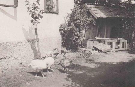 ... drůbež před myslivnou v roce 1919