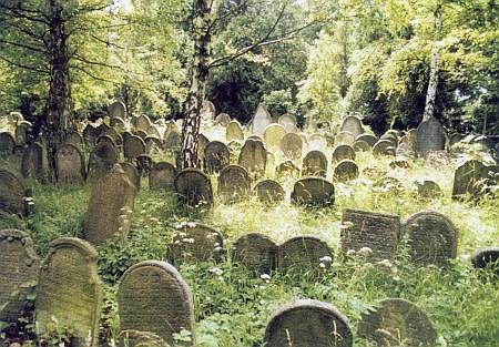 Stará část rozsáhlého židovského hřbitova v Golčově Jeníkově, tajemná zelená předzvěst věčného domova