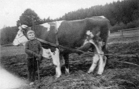 Jako pasáček volů v roce 1942