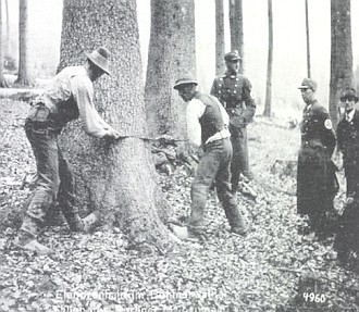 Jedle z Boubínského pralesa pro 1. máj v Berlíně 1939: seriál snímků