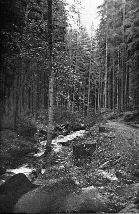 """Partie na Boubínském potoce nedaleko Řepešína na pohlednici Josefa Seidela, nazvané """"Partie aus dem Altsägebachtal"""""""