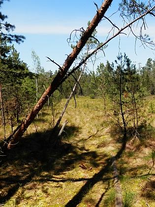 Červené blato u Jiříkova Údolí