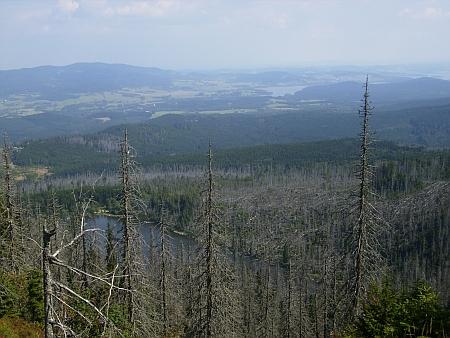 Pohled z Jezerní stěny přes mrtvé stromy na Plešné jezero a dál do Čech v roce 2015