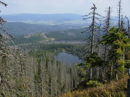 ... a mezi poničenými lesy v roce 2013