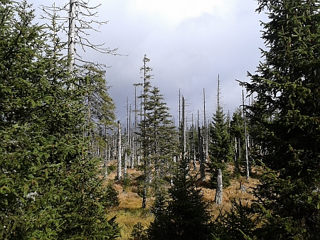 Lesy pod Blatným vrchem (2015)