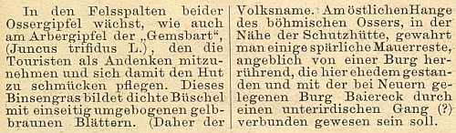 """O sítině trojklanné (Juncus trifidus), zvané též """"kamzičí štětka"""", která bývala upomínkou turistů na horu Ostrý, jakož i o celém Železnorudsku psal pro šumavského průvodce Böhmerwaldbundu (1888)"""