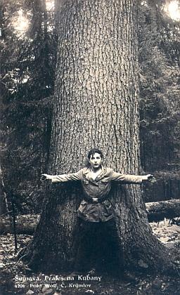 """Na Boubíně před kmenem letitého stromu, nazývaného """"Králem smrků"""", stojí Franz Wolf na pohlednici sice sčeským textem, ale s německým označením hory"""