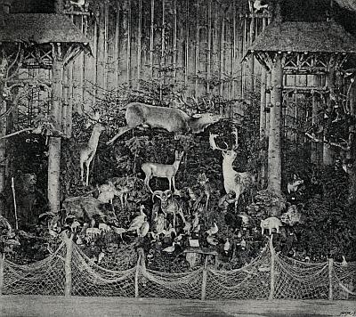 Zvěř užitková a škodná ve schwarzenberském pavilonu naJubilejní výstavě 1891