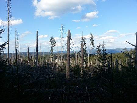 Lesy u Plešného jezera v roce 2015